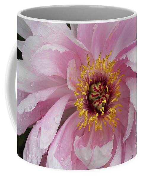 Flower Coffee Mug featuring the photograph Peonie In Pink by Deborah Benoit
