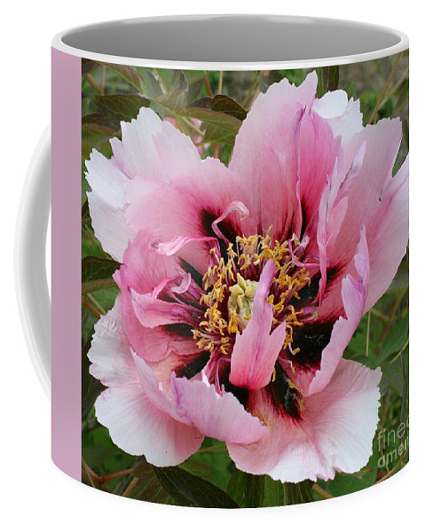 Peony Coffee Mug featuring the photograph Peony by Christiane Schulze Art And Photography