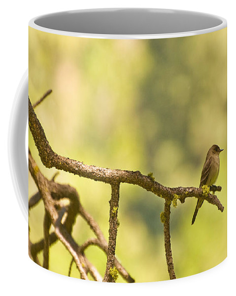Bird Coffee Mug featuring the photograph Perched by Mick Burkey