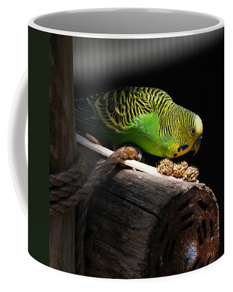 Bird Coffee Mug featuring the photograph Perched Parakeet by Marilyn Hunt