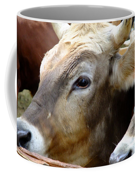 Animals Coffee Mug featuring the photograph Performance Anxiety by RC DeWinter