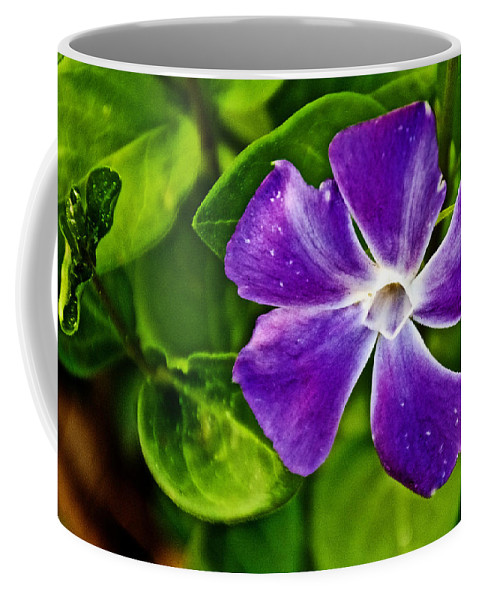 Periwinkle At Pilgrim Place In Claremont Coffee Mug featuring the photograph Periwinkle At Pilgrim Place In Claremont-california by Ruth Hager