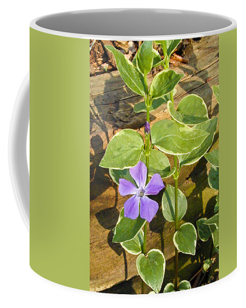 Periwinkle Coffee Mug featuring the photograph Periwinkle by Douglas Barnett