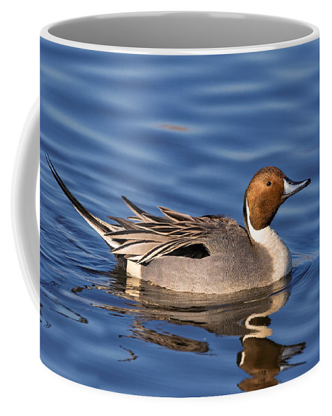 Northern Pintail Coffee Mug featuring the photograph Perky Pintail by Kathleen Bishop