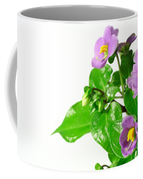 Closeup Coffee Mug featuring the photograph Persian violets by Gaspar Avila