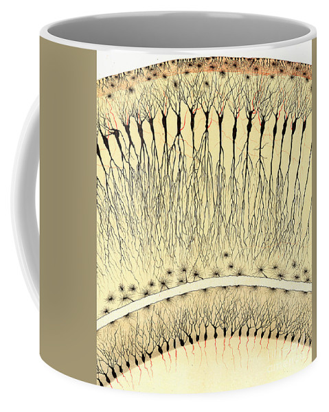 History Coffee Mug featuring the photograph Pes Hipocampi Major Santiago Ramon Y Cajal by Science Source