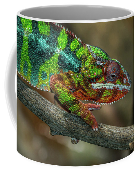 Reptile Coffee Mug featuring the photograph Ambilobe Panther Chameleon by Jimmy Tran