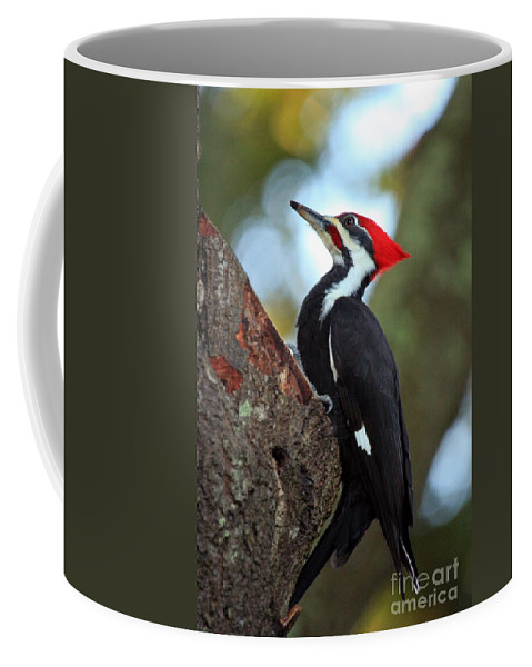 Woodpecker Coffee Mug featuring the photograph Pilated Woodpecker by Randy Matthews