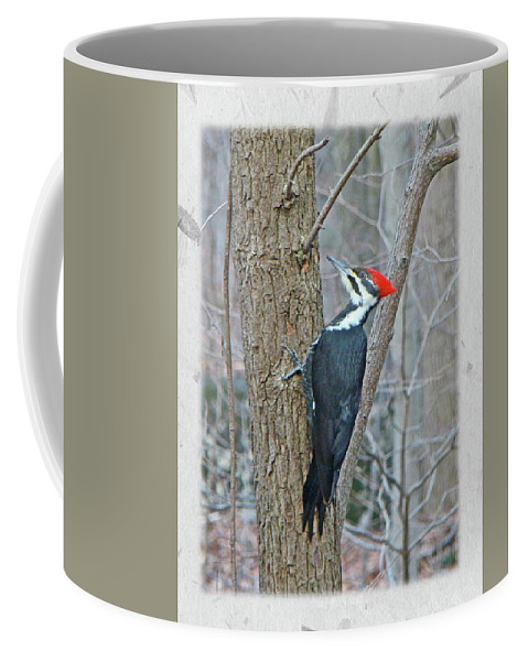 These Are Large Birds (crow Size) With A Bright Red Crest. They Are The Model For Woody Woodpecker Coffee Mug featuring the photograph Pileated Woodpecker - Dryocopus Pileatus by Mother Nature