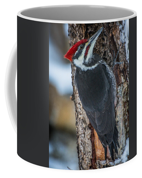 Bird Coffee Mug featuring the photograph Pileated Woodpecker by Constance Puttkemery