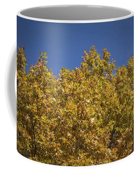 Fall Coffee Mug featuring the photograph Pin Oaks In The Fall No 2 by Teresa Mucha