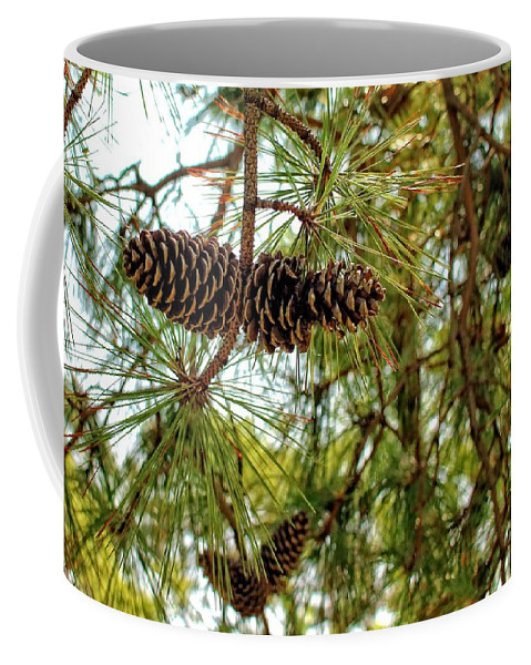 Pine Cones Coffee Mug featuring the photograph Pine Cones by Robert McCulloch