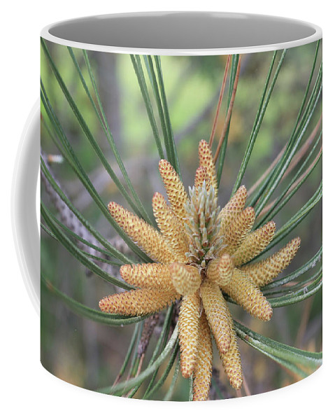 Pine Coffee Mug featuring the painting Pine Flower In Summer Close Up by Catalina Diaz