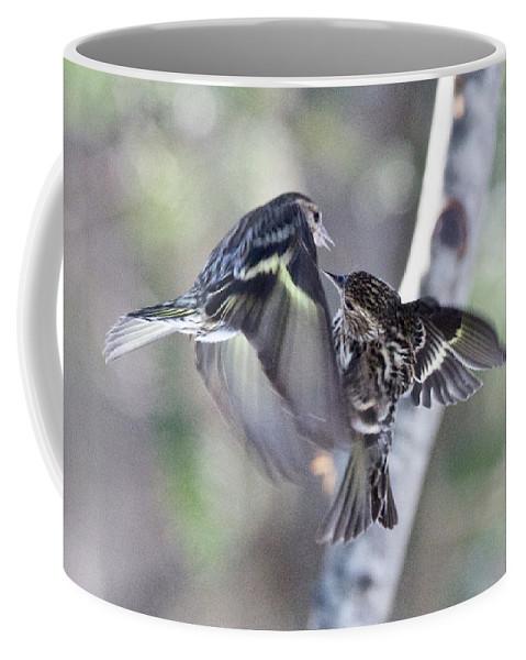 Bird Coffee Mug featuring the photograph Pine Siskins Fighting 6829 by Michael Peychich