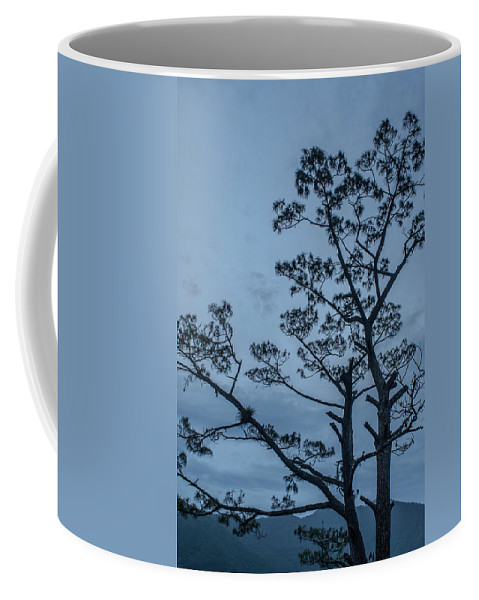 Antigua Guatemala Coffee Mug featuring the photograph Pine Tree Antigua Guatemala by Totto Ponce