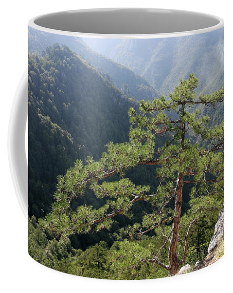 Pine Coffee Mug featuring the photograph Pine Tree On Mountain Landscape by Goce Risteski