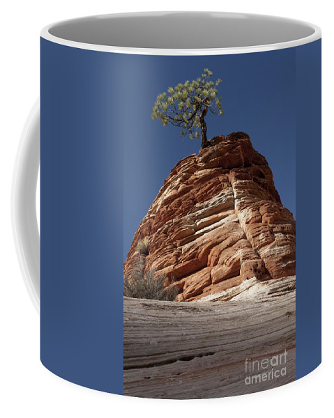 Pinyon Pine Coffee Mug featuring the photograph Pine Tree On Sandstone by Sandra Bronstein