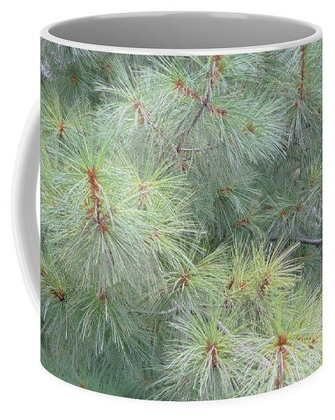 Pines Coffee Mug featuring the photograph Pines by Rhonda Barrett