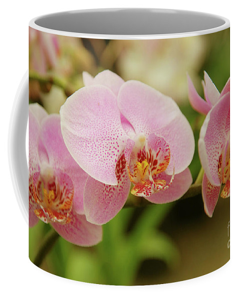 Orchids Coffee Mug featuring the photograph Pink And Beautiful by Susanne Van Hulst