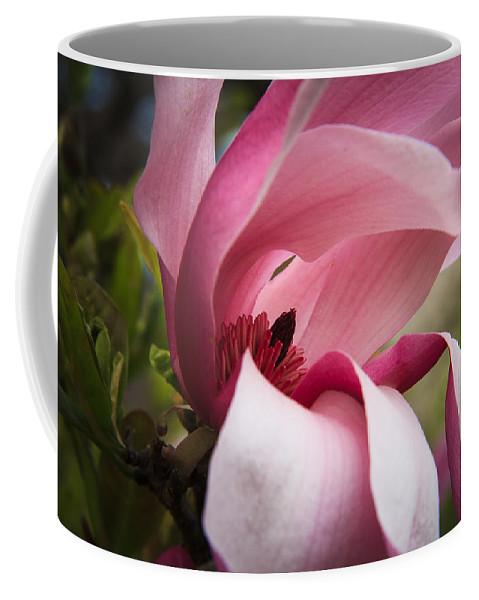 Morton Arboretum Coffee Mug featuring the photograph Pink And White Magnolia by Joni Eskridge