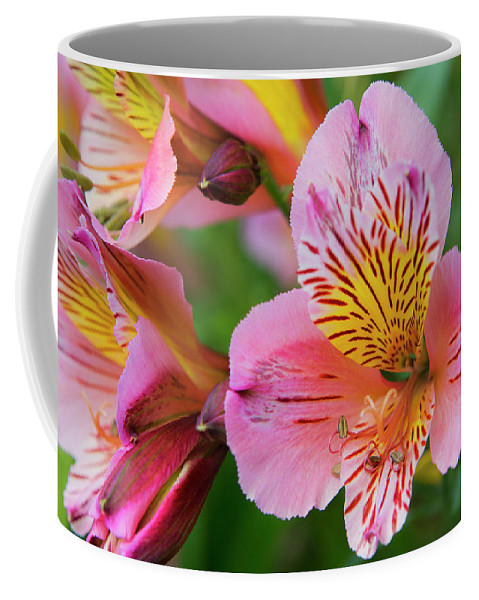 Devon Coffee Mug featuring the photograph Pink And Yellow Flora by David Hare