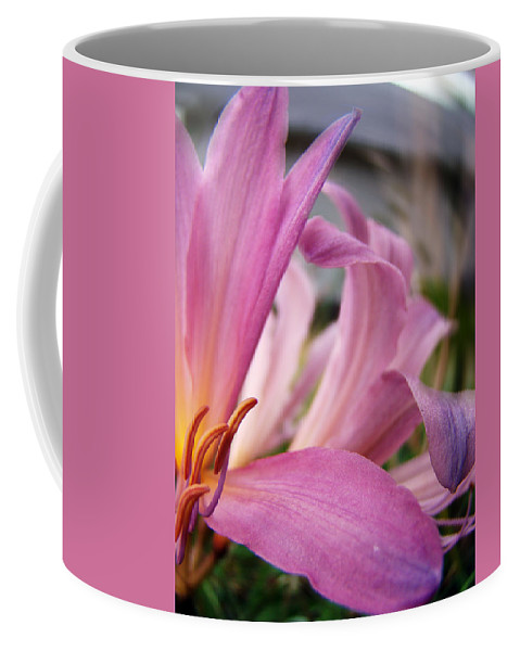 Pink Coffee Mug featuring the photograph Pink Beauty by Terry Anderson