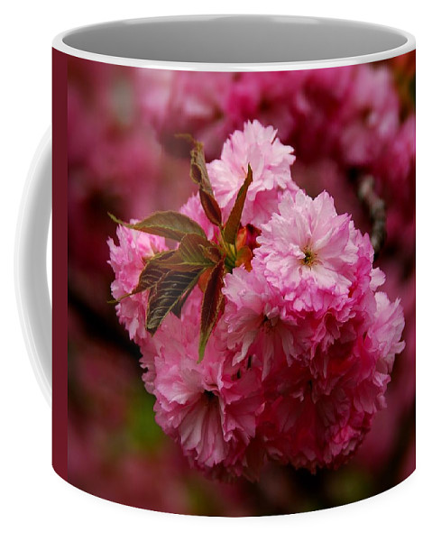 Cherry Blossom Trees Coffee Mug featuring the photograph Pink Blooms by Angie Tirado