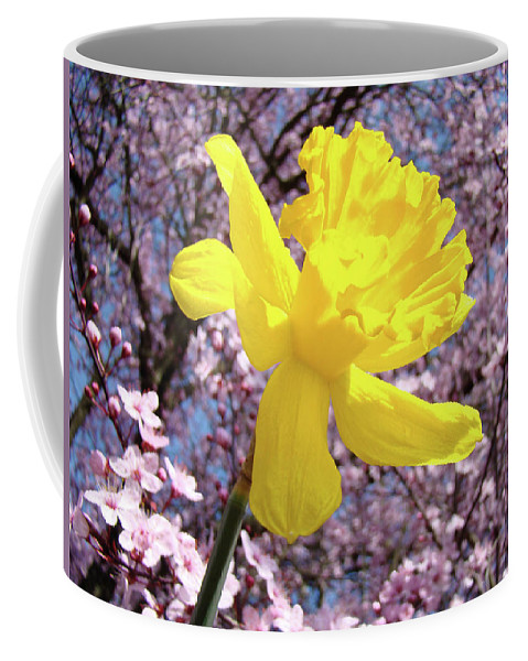 Nature Coffee Mug featuring the photograph Pink Blossom Spring Trees Yellow Daffodil Flower Baslee Troutman by Baslee Troutman