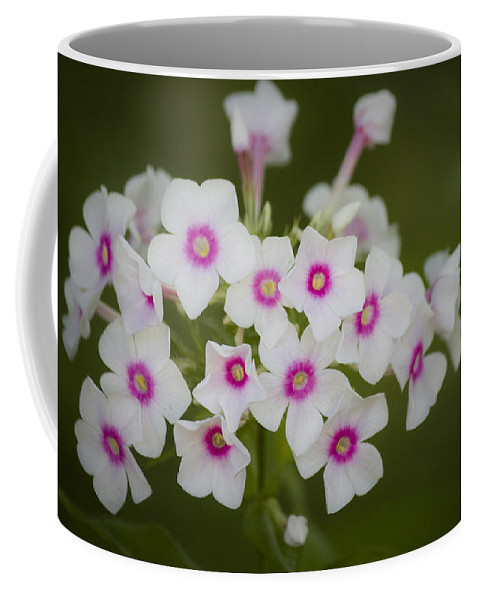 Garden Coffee Mug featuring the photograph Pink Bright Eyes Garden Phlox by Teresa Mucha