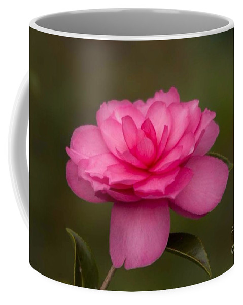 Camillea Coffee Mug featuring the photograph Pink Camellia 3 by Marta Robin Gaughen