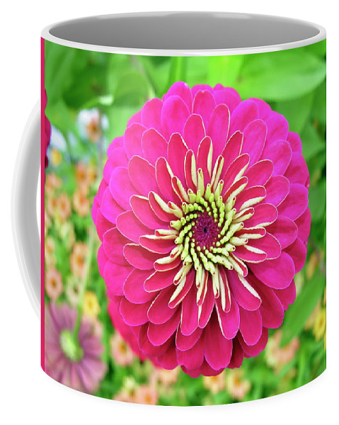 Dahlia Coffee Mug featuring the photograph Pink Dahlia by Daniel Caracappa