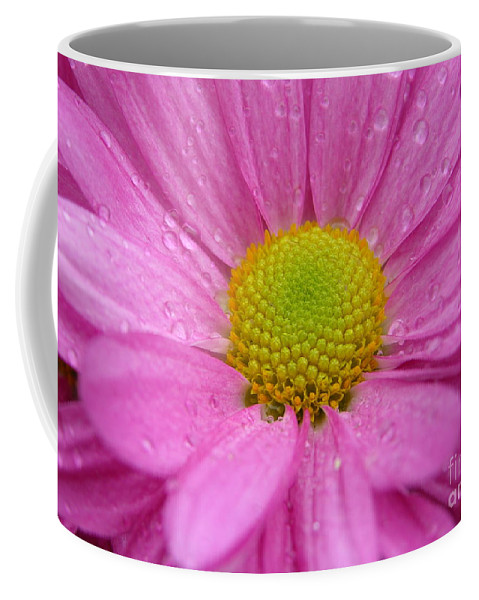 Pink Daisy Coffee Mug featuring the photograph Pink Daisy With Raindrops by Carol Groenen