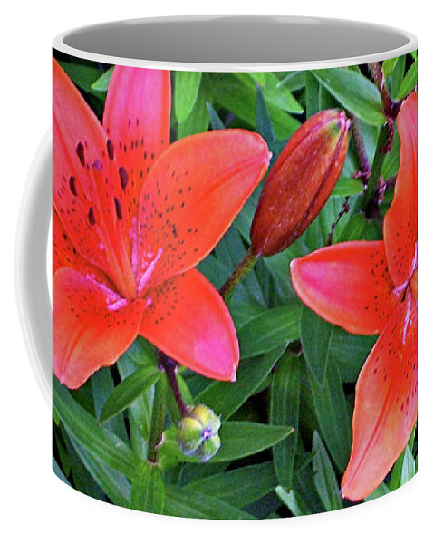 Art; Artist; Asby; Cheetah; Daylily; Design; Designer; Dory; Fine; Flower; Flowers; Garden; Graphic; Green; Jenness; Petals; Photo; Photographer; Pink; Summer; Sunny; Sunshine Coffee Mug featuring the photograph Pink Daylilies by Jenness Asby