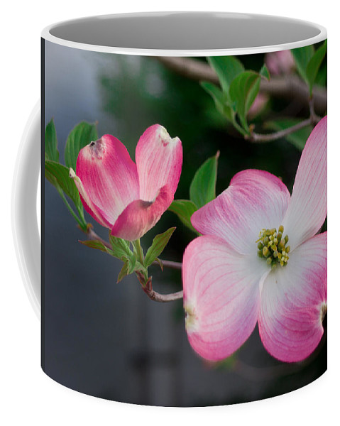 Spring Coffee Mug featuring the photograph Pink Dogwood In The Morning Light by Lori Coleman