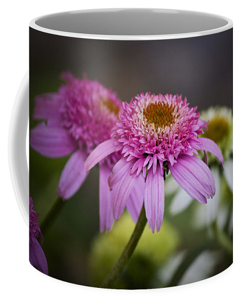 Pink Coffee Mug featuring the photograph Pink Double Delight Coneflower by Teresa Mucha