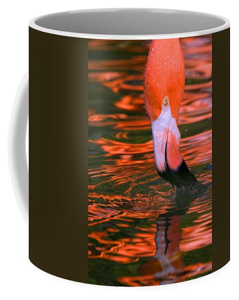 Flamingo Coffee Mug featuring the photograph Pink Flamingo by Randall Ingalls