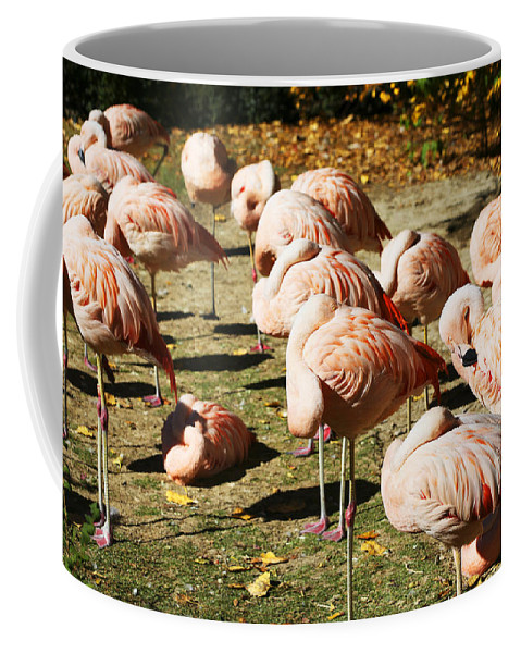 Pink Flamingos Coffee Mug featuring the photograph Pink Flamingos by Marilyn Hunt
