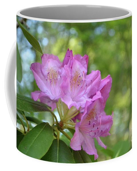 Rhododendron Coffee Mug featuring the photograph Pink Flowering Rhododendron Bush In Full Bloom by DejaVu Designs