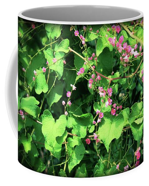Keywords Coffee Mug featuring the photograph Pink Flowering Vine2 by Megan Dirsa-DuBois