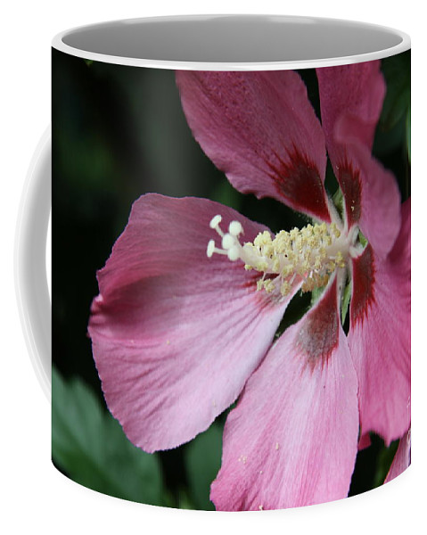 Hibiscus Coffee Mug featuring the photograph Pink Hibiscus Cose -up by Christiane Schulze Art And Photography