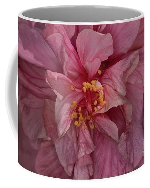 Hibiscus Coffee Mug featuring the photograph Pink Hibiscus by Elisabeth Lucas