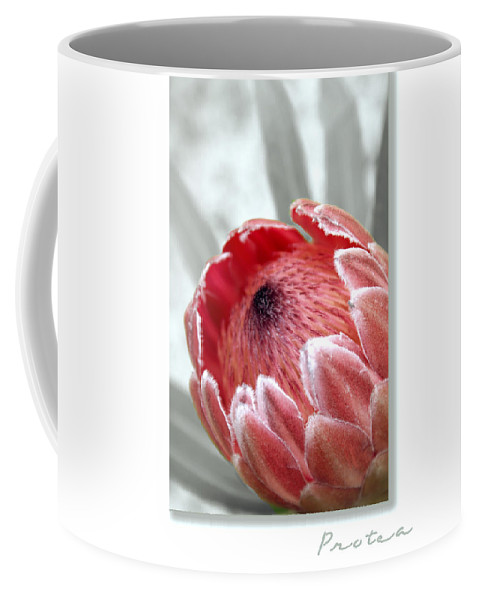 Nature Coffee Mug featuring the photograph Pink Ice Protea by Holly Kempe