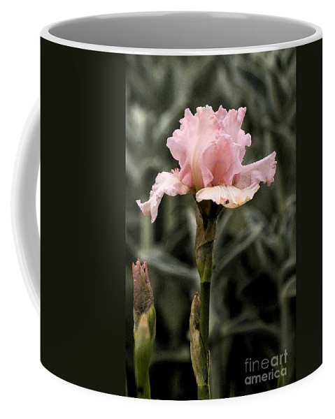 Pink Coffee Mug featuring the photograph Pink Iris by Jim And Emily Bush