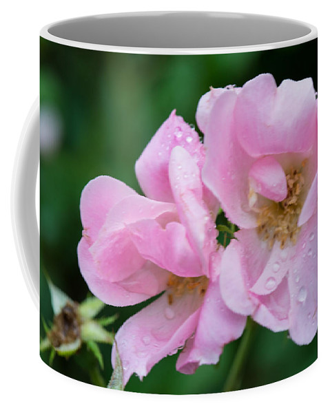 Cedar Park Texas Coffee Mug featuring the photograph Pink Knockout Rose After The Rain by JG Thompson
