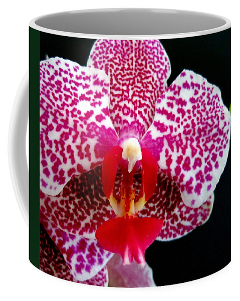 Flowers Coffee Mug featuring the photograph Pink Lady by Cheryl Ehlers