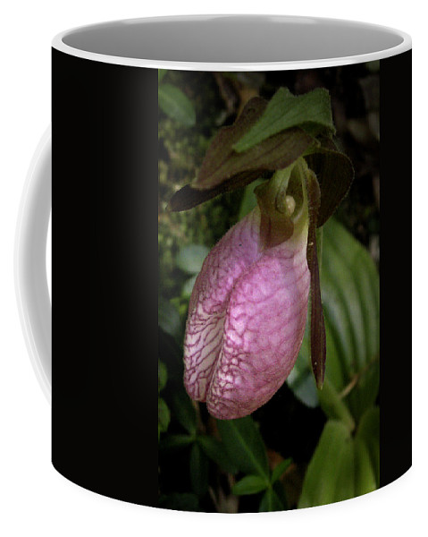 Flowers Coffee Mug featuring the photograph Pink Lady Slipper by Nancy Griswold