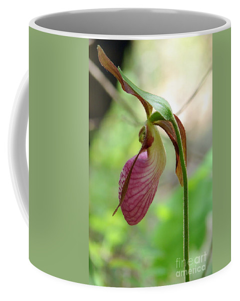 Pink Coffee Mug featuring the photograph Pink Lady Slipper by Priscilla Richardson