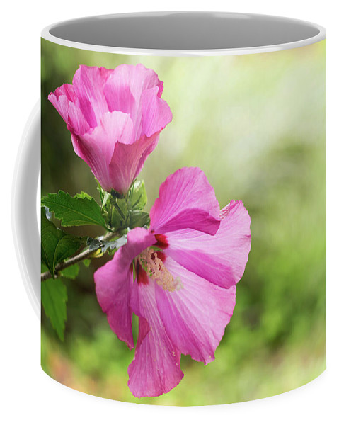 Terry D Photography Coffee Mug featuring the photograph Pink Light Rose Of Sharon 2016 by Terry DeLuco