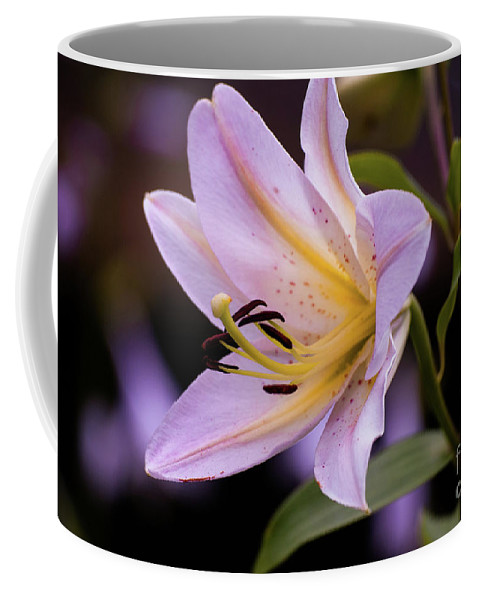 Pink Coffee Mug featuring the photograph Pink Lilly by Kevin Gladwell