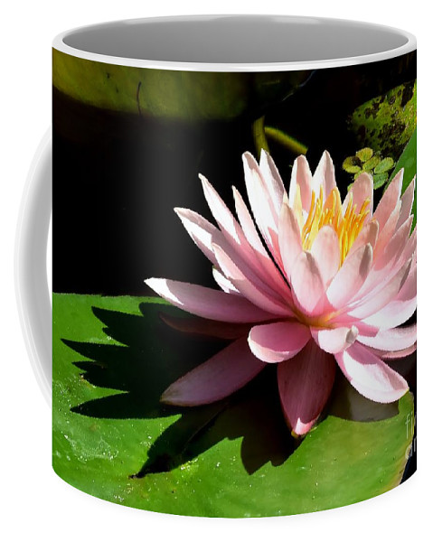 Pink Lily Reflection Coffee Mug featuring the photograph Pink Lily 9 by Lisa Renee Ludlum